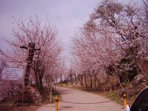 Pallyong mountain in Masan in the spring