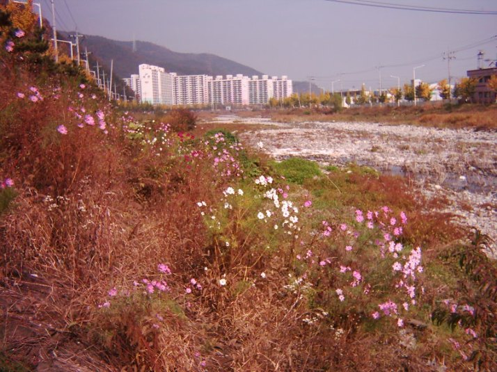 Wild flowers planted along the river